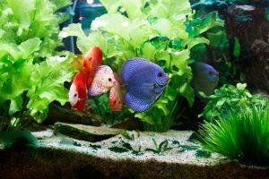 fish 2204687 1920 300x200 - Aquarium Services
